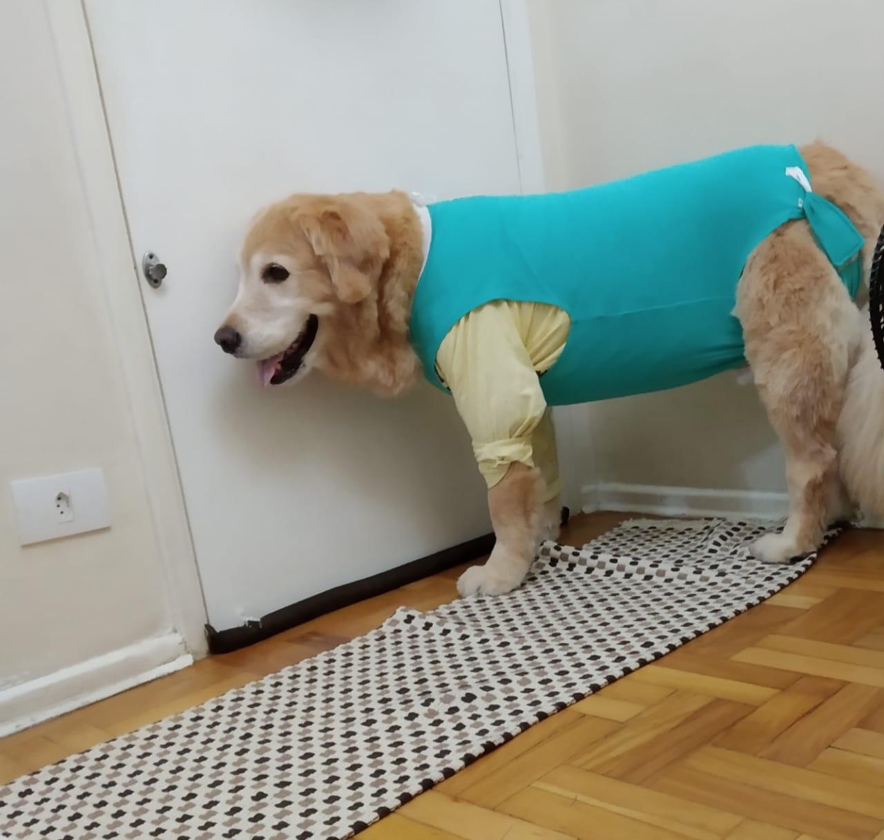 Câncer em cães – Caso clínico