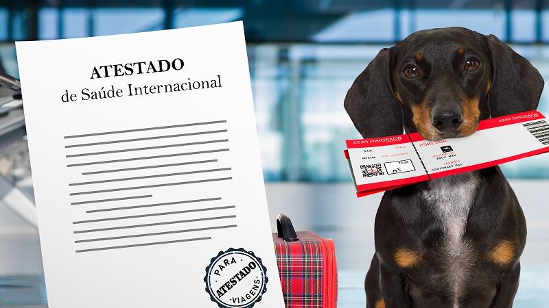 Viagem para o exterior com o cachorro ou gato – Passo a passo! (atualizado julho/19)